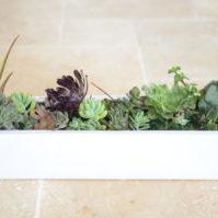 A Dash of Green,. White succulent planter, pot plant